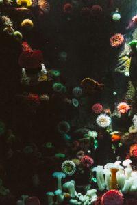 Galeria en el acuario ripley Toronto