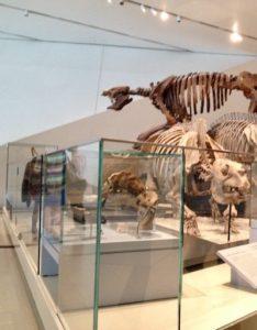 Sala de dinosaurios en el museo royal Ontario Toronto