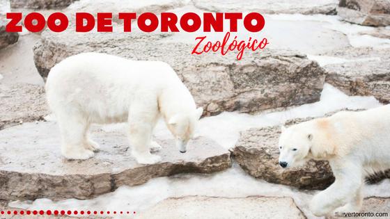 Zoo de Toronto y sus osos