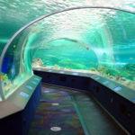 Que hacer en toronto visitando el acuario ripley